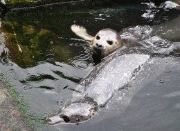 Scottish Sea Life Sanctuary